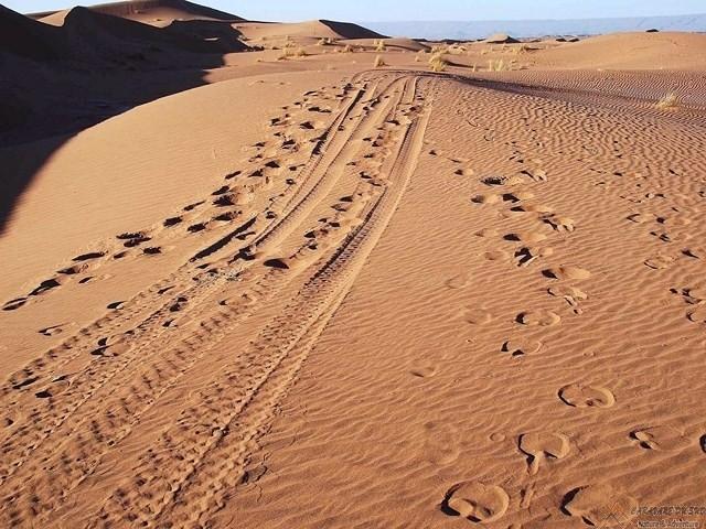 Une-Journée-dans-les-dunes-de-Chegaga-